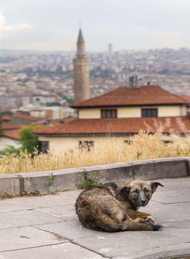 Brown bezdomny jest prześladowanym lying on the beach na kamień ziemi miasto krajobrazie w tle i, Ankara, Turcja zdjęcia royalty free