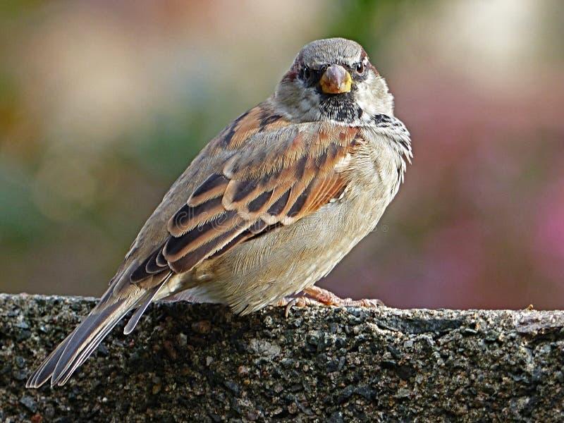 Brown Bird Standing on Gray Concrete royalty free stock photos