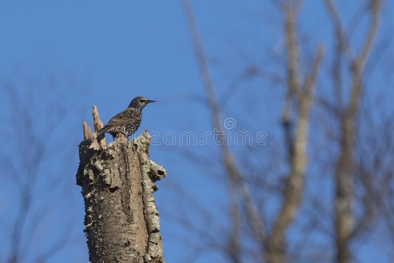 Brown Bird on Top of Brown Tree Trunk stock photography