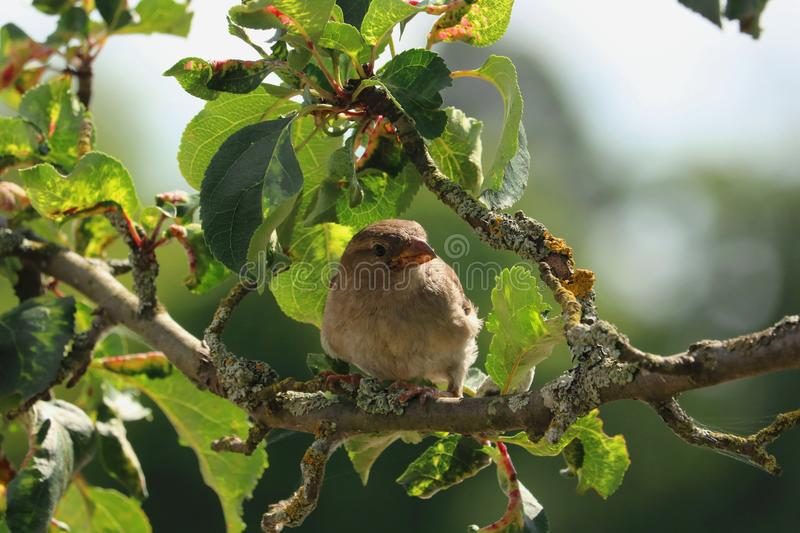 Brown Bird on Tree Branch during Daytime royalty free stock photos