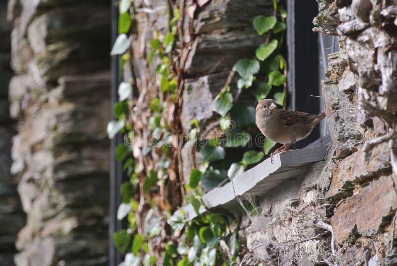 Brown Bird On Window Free Public Domain Cc0 Image