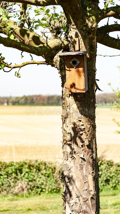 Brown birdhouse hung on a trunk of a tree with a field in the background. Wonderful and sunny winter day in Oensel south Limburg in the Netherlands Holland royalty free stock photo