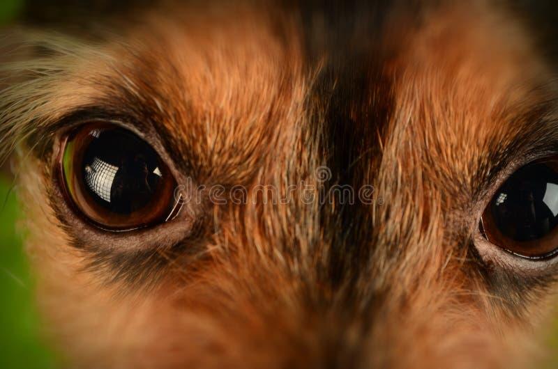 Brown And Black Animal Eyes Free Public Domain Cc0 Image
