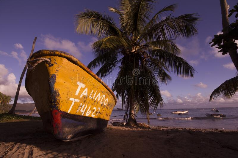 Brown and Black Boat on Shore Near Coconut Trees Under Blue Sky and Clouds royalty free stock photo