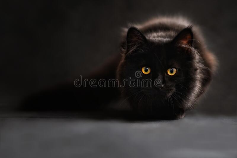 Brown And Black Cat Free Public Domain Cc0 Image