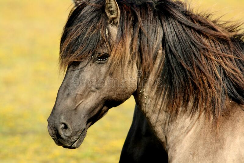 Brown Black Horse royalty free stock photos