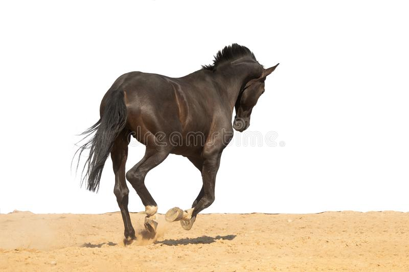 Horse jumps on sand on a white background royalty free stock photos