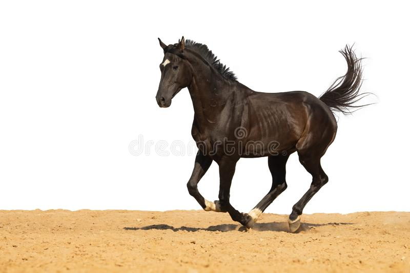 Horse jumps on sand on a white background stock photography