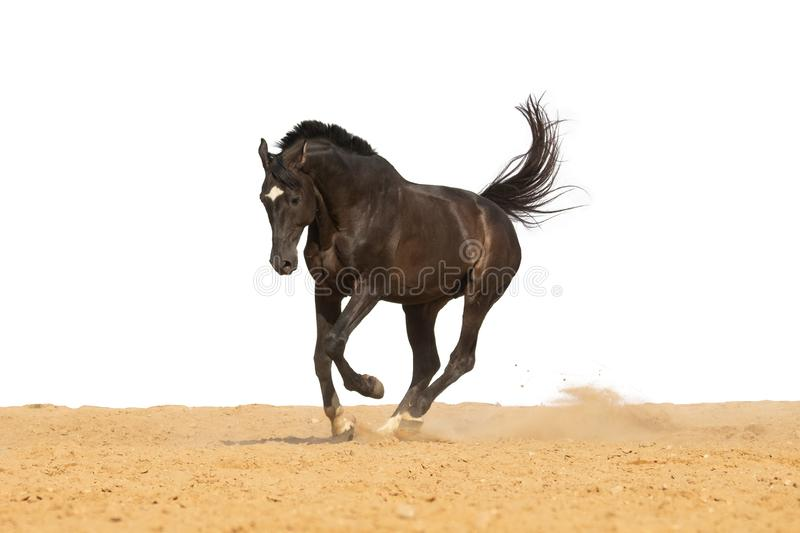 Horse jumps on sand on a white background stock image