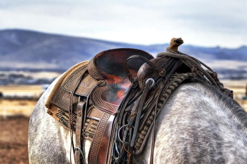 Brown and Black Leather Horse Saddle on White and Gray Animal royalty free stock image