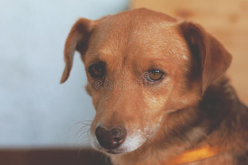 Brown and Black Short Coat Dog royalty free stock photography