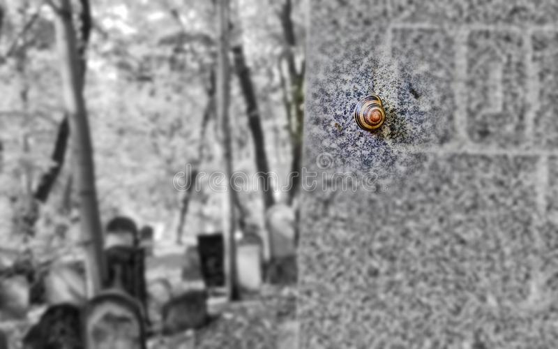 Brown and Black Snail Crawling on Wall royalty free stock image