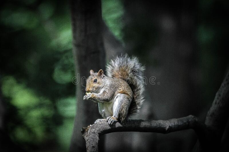 Brown And Black Squirrel Standing On Tree Branch During Daytime Free Public Domain Cc0 Image