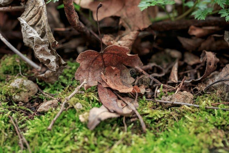 Brown-Blatt liegt aus den Grund, der mit Moos, Niederlassungen umfasst wird Grüner Frühlingswald in den Sonnenstrahlen stockbild