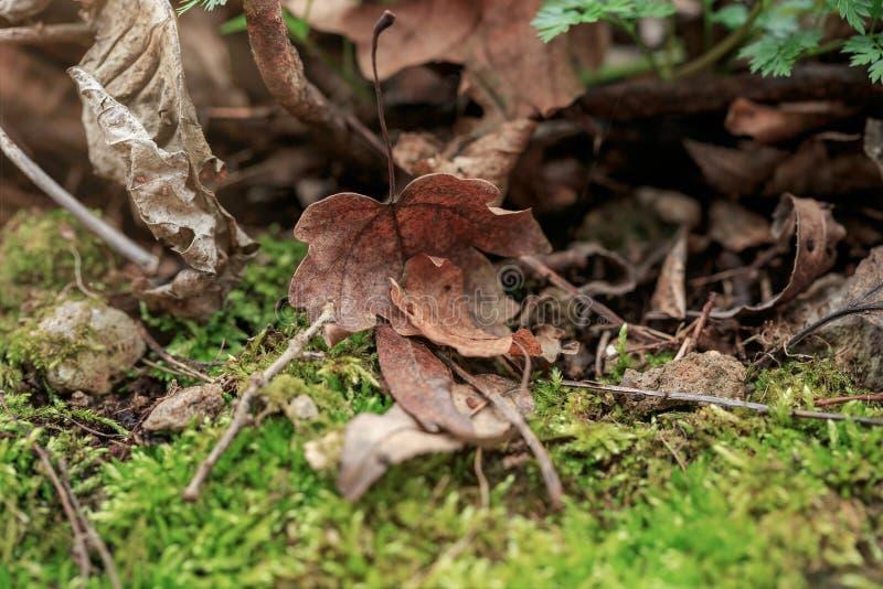 Brown-Blatt liegt aus den Grund, der mit Moos, Niederlassungen umfasst wird Grüner Frühlingswald in den Sonnenstrahlen stockfotos