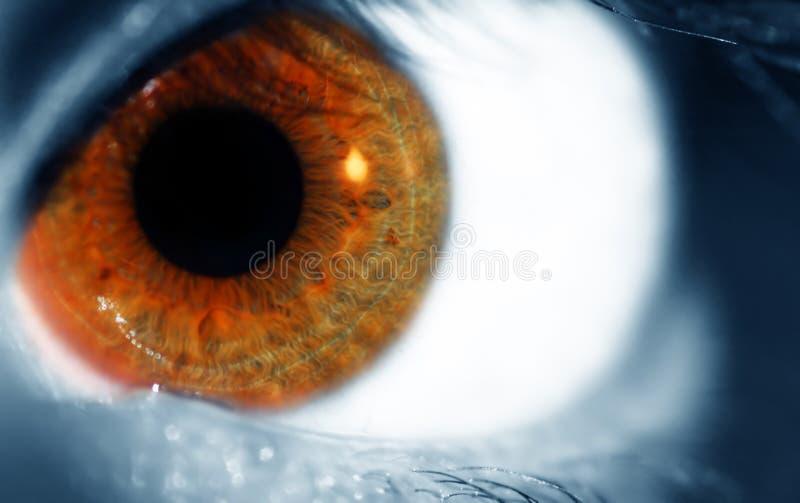 Brown blue eye stock image