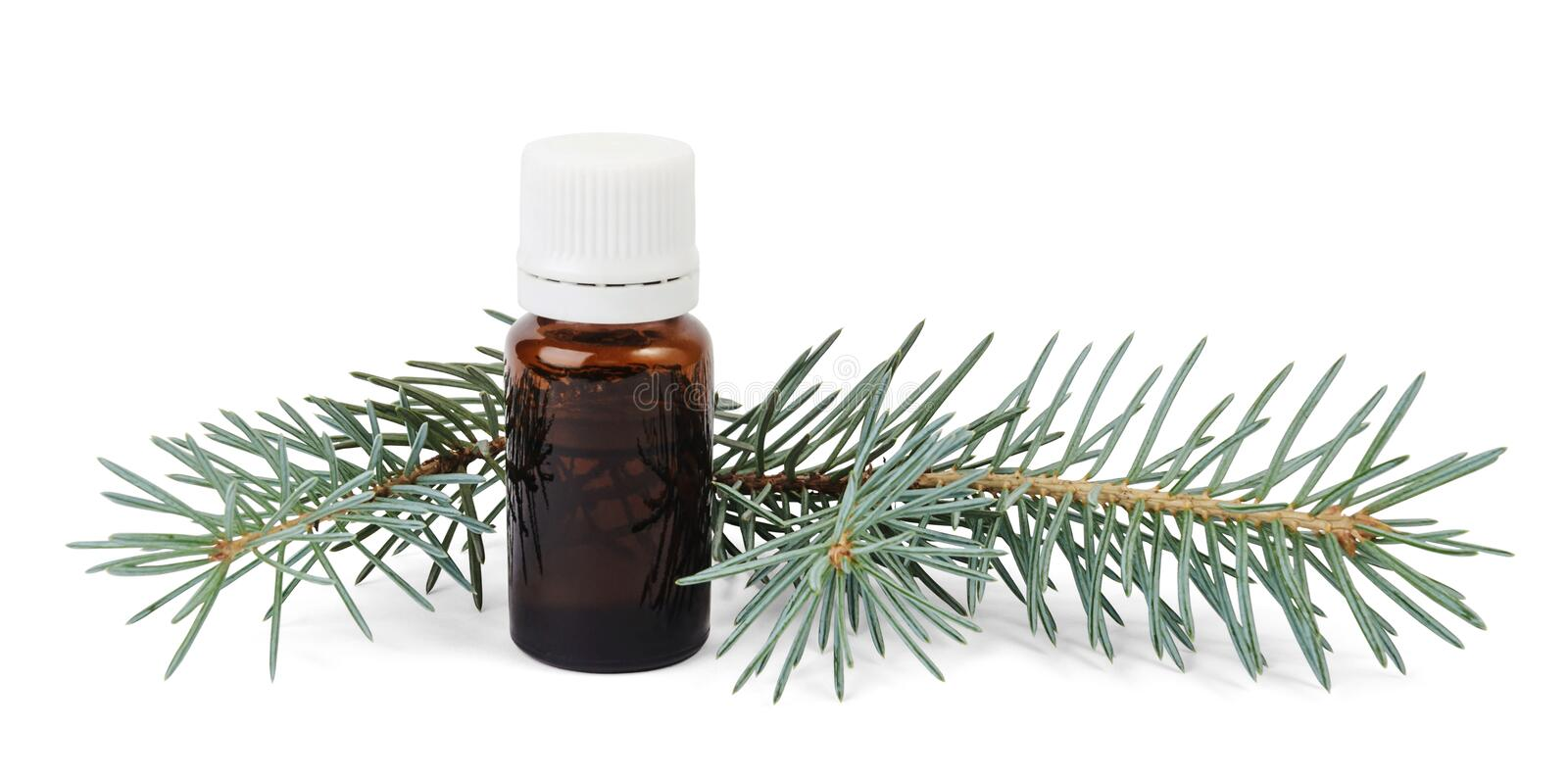 Brown bottle of spruce essential oil and fir branches stock photos