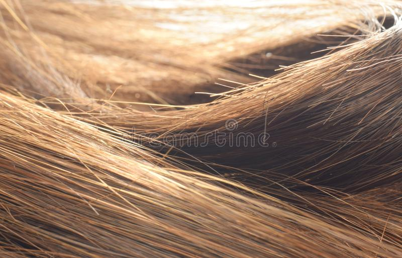 Abstract background brown women hair. Brown brunette hair closed up beauty background stock image
