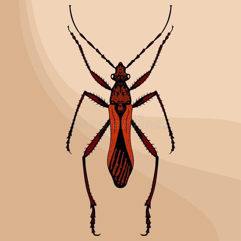 Download Brown bug stock vector. Illustration of entomology, spotty - 14999616