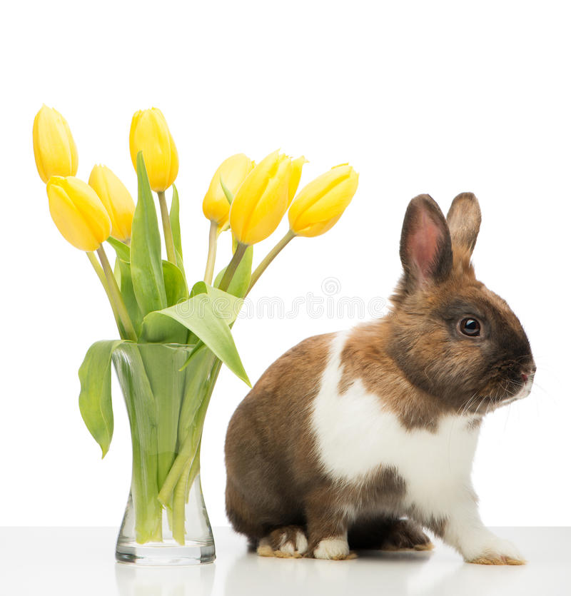 Free Brown Bunny Is Near Vase With Yellow Tulips Royalty Free Stock Photo - 50337605
