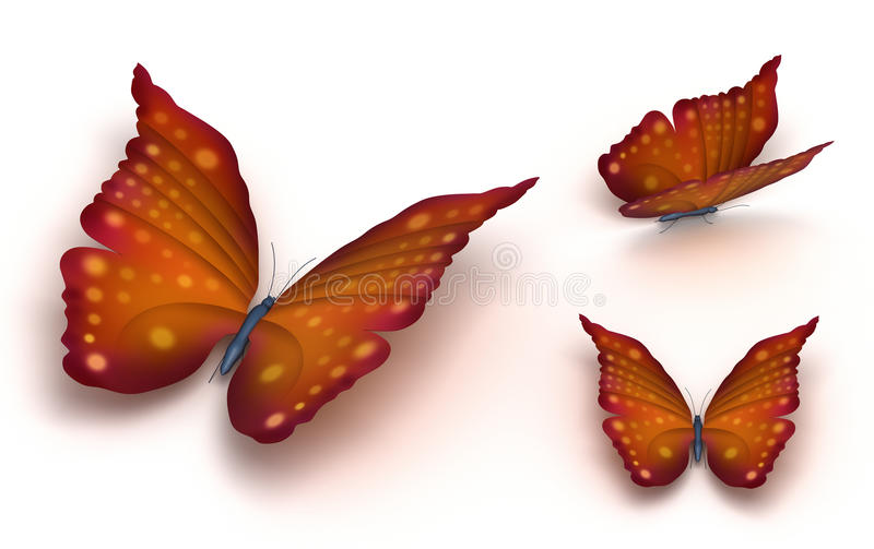 Download Brown butterfly stock illustration. Illustration of isolated - 19182827