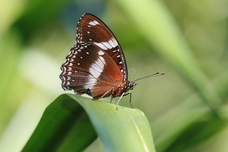 Download Brown Butterfly Stock Photo - Image: 3818580