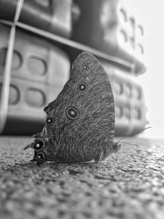 the brown butterfly on the cement ground. the focus at the wings.the picture is monochrome. royalty free stock photography