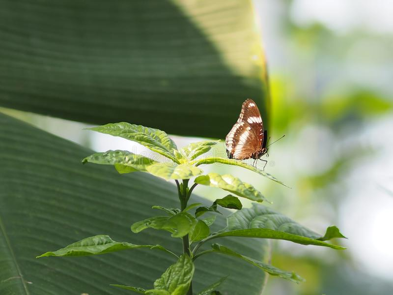 Brown butterfly on the white flower blur nature background. Environment garden insect animal stock image