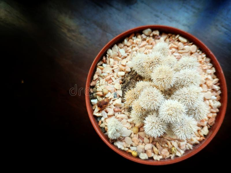 Brown cactus pot on the dark wooden table stock photography
