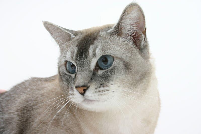 brown cat стоковое изображение