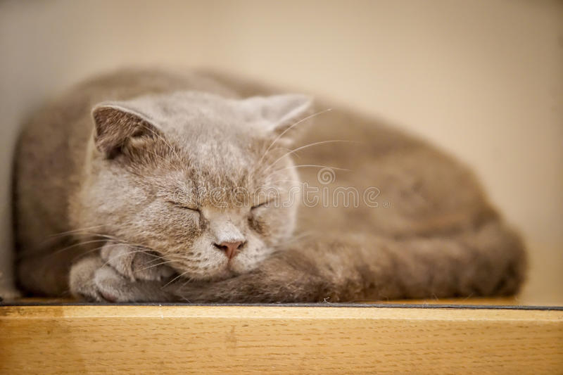 Brown cat. On the ground with dramatic tone, select focus eye royalty free stock photography