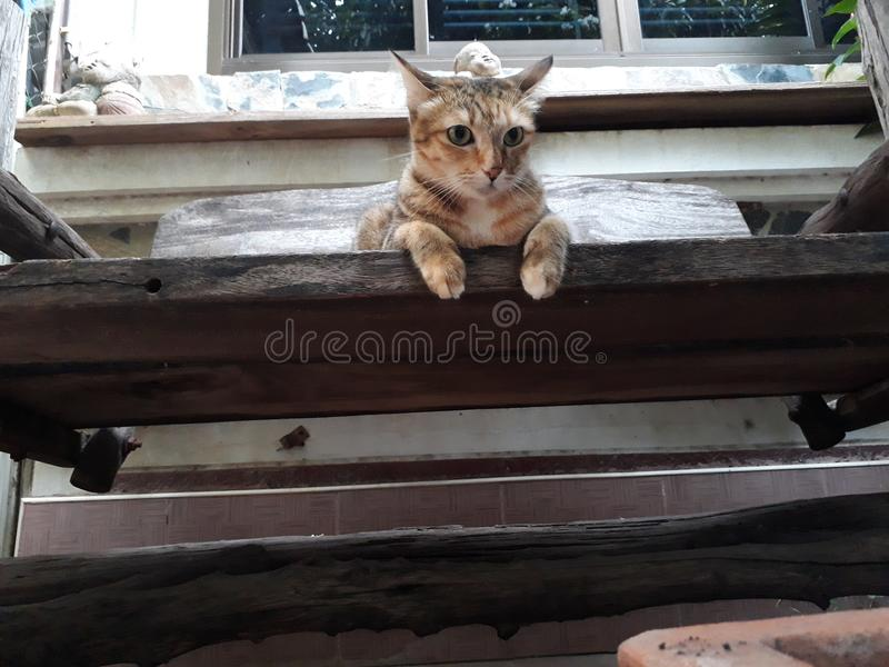A brown cat sits on an old wooden floor, looking nothing. royalty free stock images