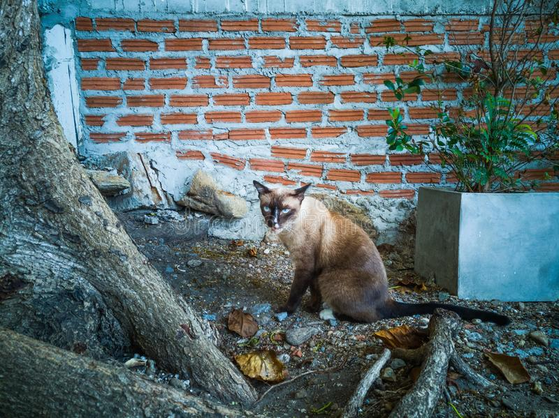 The brown cat stared carefully under the tree by the wall. royalty free stock images