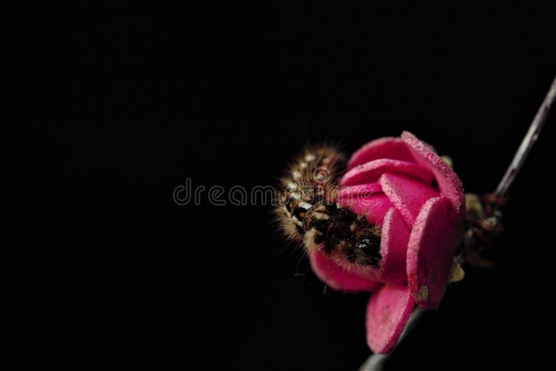 Brown Caterpillar immagine stock libera da diritti