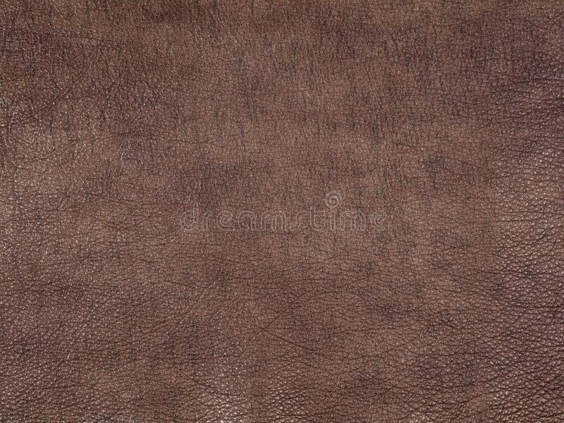 Brown cattle leather texture background royalty free stock photography