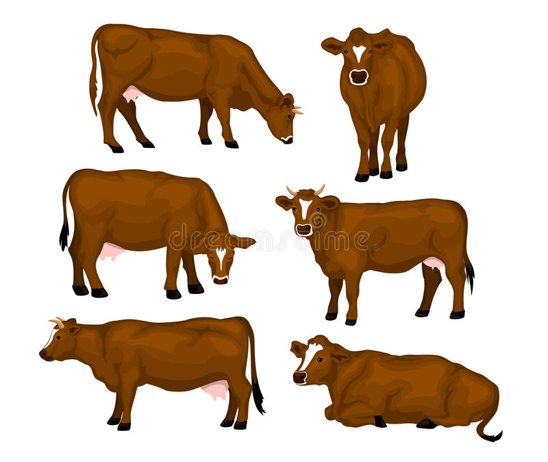 Brown cattle set. Cows standing, lying, eating, grazing, side and front view stock illustration