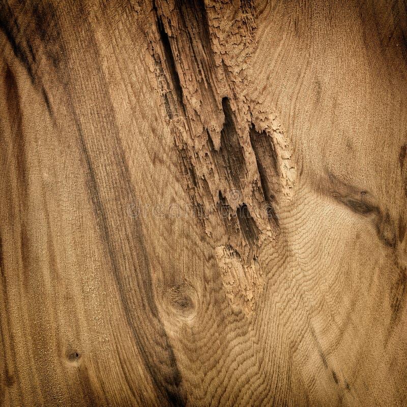 Brown cedar board pattern royalty free stock photo