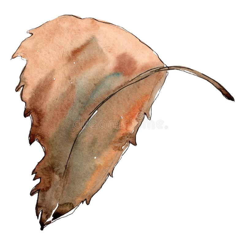 Brown chesthut leaf. Watercolor background illustration set.. Isolated leaves illustration element. vector illustration