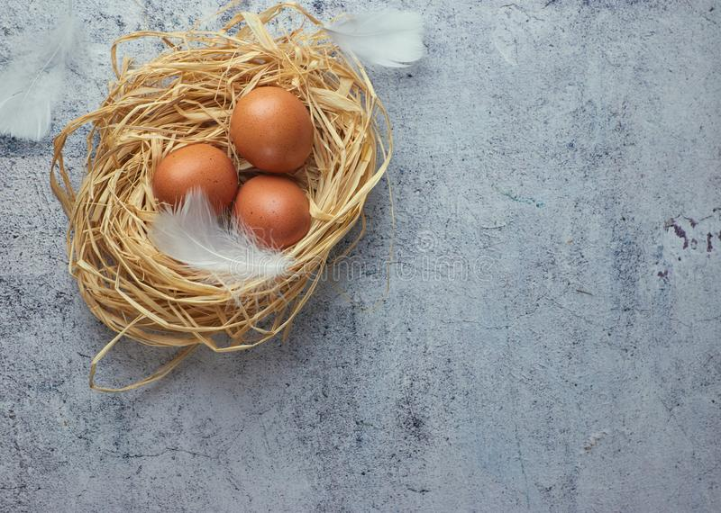 Brown chicken eggs with white feathers in hay nest on light concrete. closeup of a farm of eggs. copy space. horizontal view of stock photography