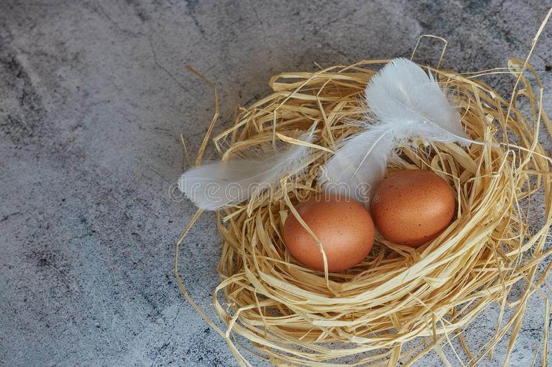 Brown chicken eggs with white feathers in hay nest on light concrete. Copy space. horizontal view of raw chicken eggs. Village stock photography