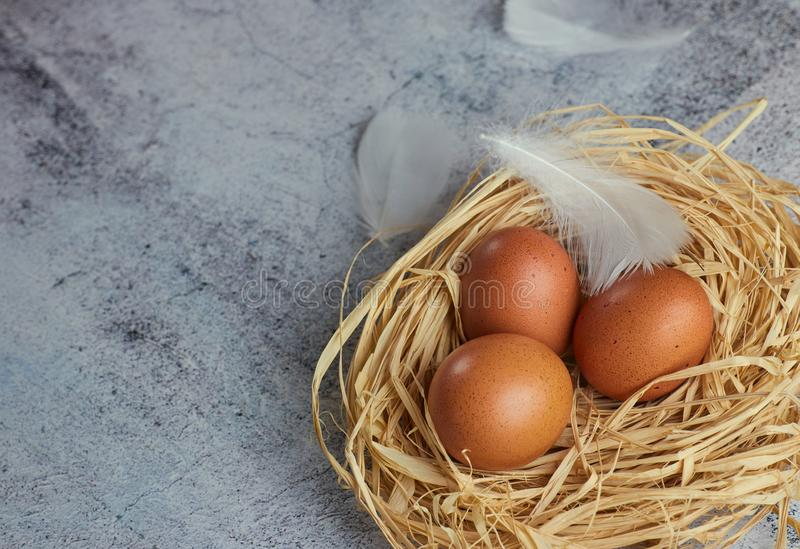 Brown chicken eggs with white feathers in hay nest on light concrete. closeup of farm eggs. horizontal view of raw chicken eggs. royalty free stock photo
