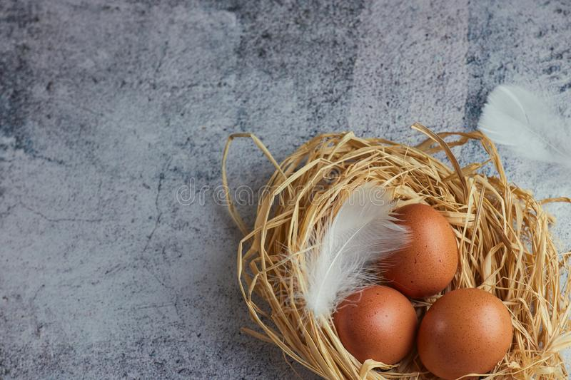 Brown chicken eggs with white feathers in hay nest on light concrete. closeup of a farm of eggs. copy space. horizontal view of royalty free stock photos