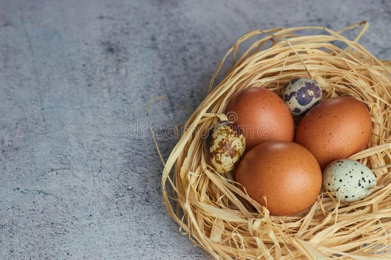Brown chicken eggs with quail eggs in hay nest on concrete. closeup of a farm of eggs. horizontal view of raw chicken royalty free stock photography