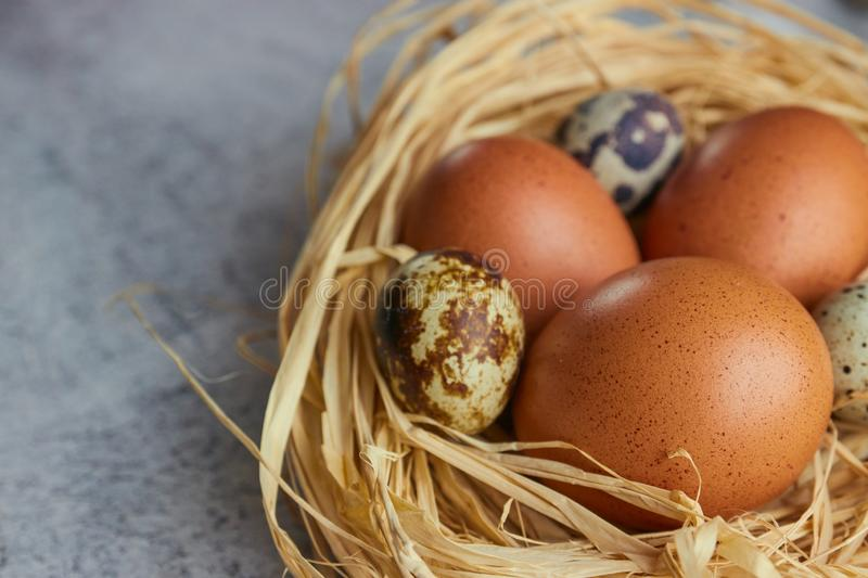 Brown chicken eggs with quail eggs in hay nest on concrete. closeup of a farm of eggs. horizontal view of raw chicken stock photos