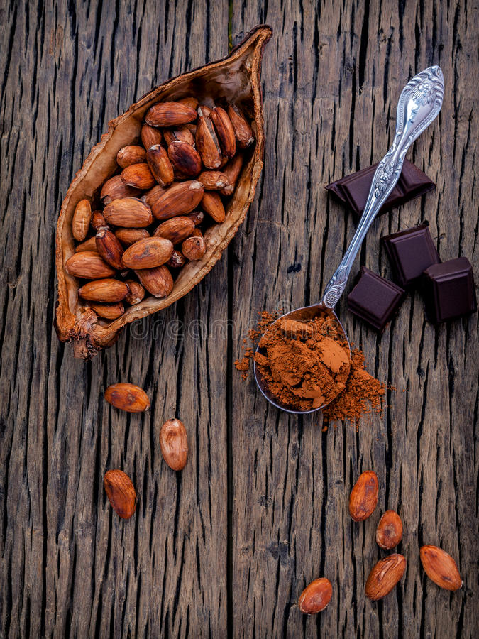 Brown chocolate powder in spoon , Roasted cocoa beans in the dry. Cocoa pod fruit and dark chocolate setup on wooden background royalty free stock photography