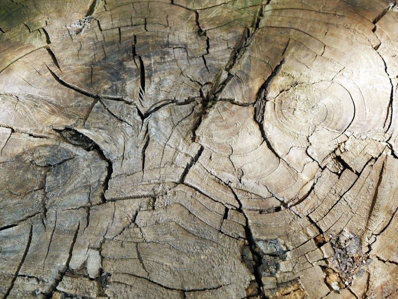 Brown cięcie drzewo, stary z pęknięciami obrazy stock