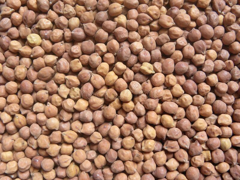 Raw brown color Chickpeas. Brown color raw whole dried Chickpeas or Bengal gram or garbanzo bean or Egyptian pea or Desi chana or Kala chana stock images