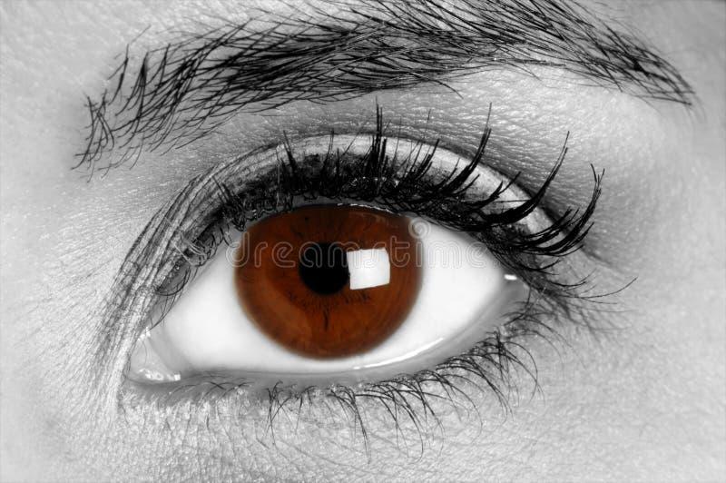 Download Brown Colored Eye stock image. Image of gaze, mascara - 9554287