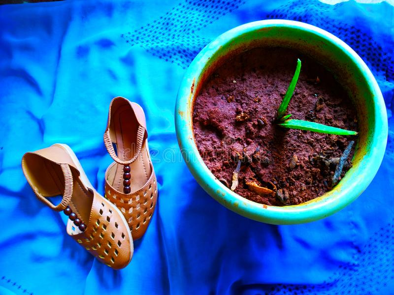 Brown colored shoes in blue background posed beside the plant royalty free stock images