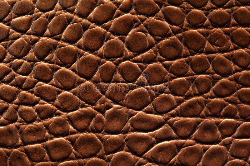 Download Brown crocodile leather stock photo. Image of skin, leather - 13248712